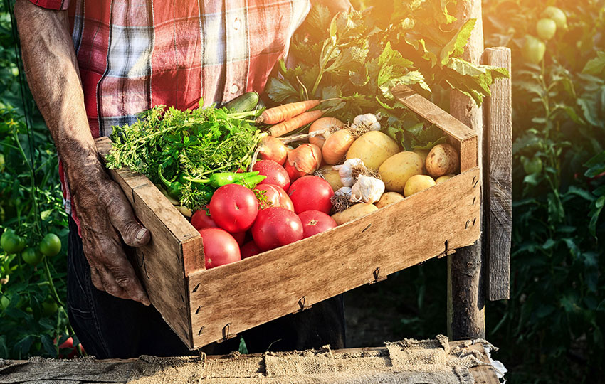 Grow Your Raw and Sustainable Organic Enterprise