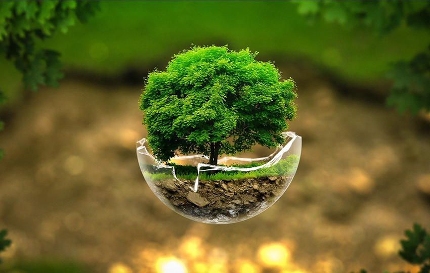 Save the environment. Become a Green Entrepreneur | IED